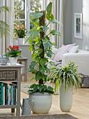 Pflanzen als Schadstoffvernichter