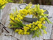 Fragrant yellow wreath of Acacia (mimosa)