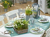 White spring blooms and herbs as table decoration