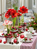 Red and white Amaryllis table decoration