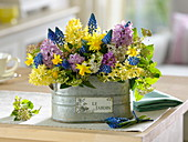 Hyacinthus (Hyacinth) Bouquet, Muscari 'Big Smile'