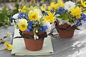 Small bouquets of Viola cornuta, Scilla