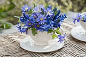 Blue mini bouquet in cup, anemone blanda (ray anemone)