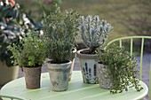 Herbs of Provence in pots