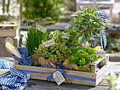 Fruit box with herbs as a gift