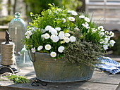 Zinc tub with herbs and edible flowers