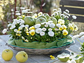 Basket with 'Granny Smith' and 'Golden Delicious' apples (Malus)