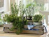 Wooden basket with herbs of Provence in pots