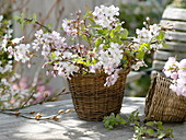 Basket as a vase with Prunus and Malus branches