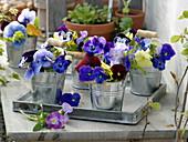 Sträuße aus Viola cornuta (Hornveilchen) und Viola wittrockiana