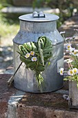 Heart made of grasses and bellis (daisies) on old zinc can
