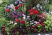 Red flowerbed with Chaenomeles speciosa 'Friesdorfer type 205'