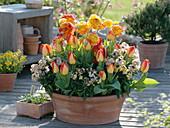 Terracotta bowl with ranunculus, Tulipa 'American Dream'