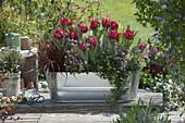 Tin box with Tulipa 'Red Princess', Uncinia rubra 'Belinda's Find'