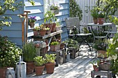 Growing young plants and seedlings on the terrace