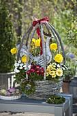 Egg-shaped Easter basket planted with Ranunculus (ranunculus), Bellis