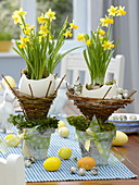 Ostrich eggs in wicker baskets, put in pots of birch bark