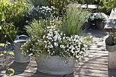 White planted tin pan