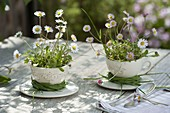 Bellis perennis (daisies) in cups, wreaths of grasses