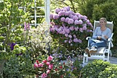Rhododendron catawbiense 'Grandiflorum', 'Daviesii', yakushimanum 'Marlis'