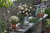 Early summer bouquet of Leucanthemum vulgare, Aquilegia