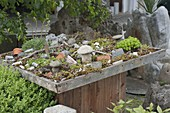 Succulent garden decorated with stones, clay pots and branches