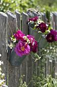 Kleiner Strauß aus Rosa (Rosen) und Kamille (Matricaria chamomilla)