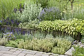 Herb bed with willow border
