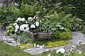 Stone trough fountain, Hydrangea macrophylla 'Snowball', Hosta