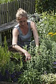 Woman with basket harvesting herbs in the garden