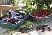 Freshly harvested berries in stainless steel kitchen sieves