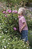Boy sniffs pink (rose)