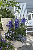 Blue bowl planted with Delphinium (larkspur), Ageratum