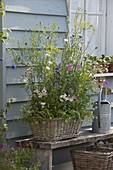 Sow summer flowers with seed ribbons in a basket box