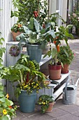 Plant stairs with vegetables