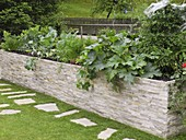 Raised bed with zucchini, carrots, carrots