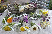 Ingredients for medicinal and tea herb bouquet laid out with labels