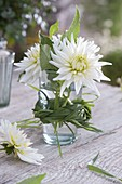 Dahlia 'My Love' (cactus dahlia) in glass with grass plait