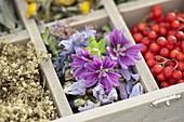 Medicinal herbs box
