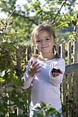 Girl picks blackberries (rubus aphid), garden fence