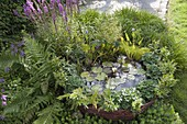 Mini pond with planted willow edging