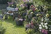 Summer bed with Helianthus 'Garden Statement', Cosmos