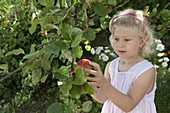 Apple harvest with children