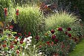 Red Summer Bed, Miscanthus 'Zebrinus' (Porcupine Grass)