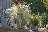 Stipa in basket and Carex in metal bucket on wall