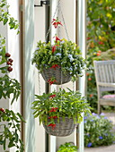 Hanging basket with herbs