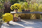 Wooden deck with Dendranthema 'Kiyellow', wicker tray