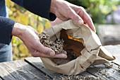 Harvesting and preserving marigold seeds