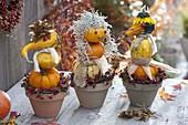 Pumpkin males in clay pots