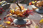 Cup with pumpkin, Rose and leaves of Acer